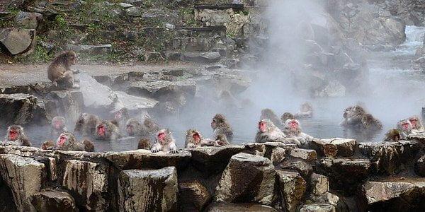 Парк снежных обезьян в Японии