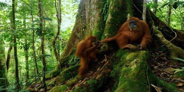 Наследие тропического леса Суматры