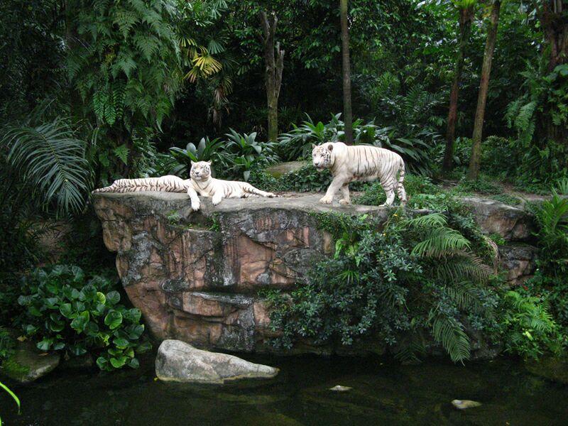 Достопримечательности Сингапура - зоопарк