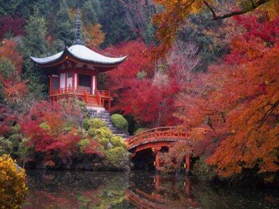 Храм сакуры Киото