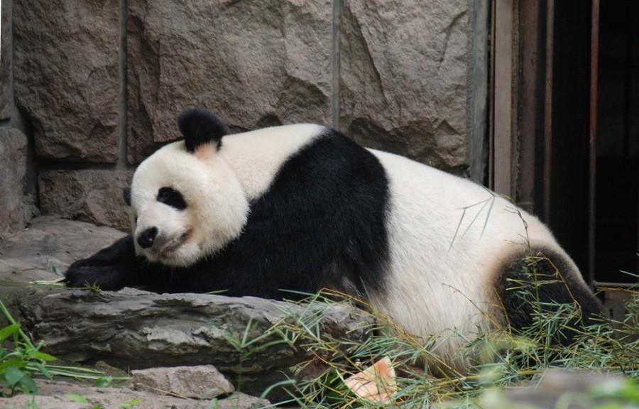 Пекинский зоопарк в Китае
