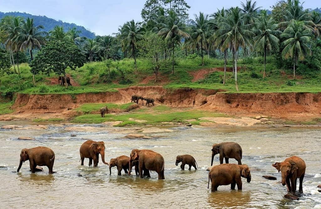 Шри-Ланка - когда лучше поехать отдыхать?