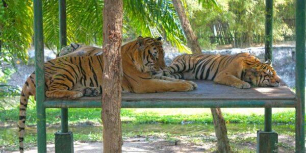 Сафари парк на острове Бали
