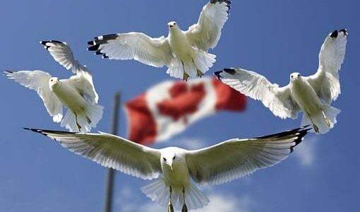 Виза в Канаду за 2 недели