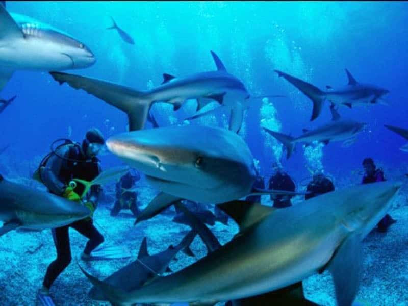 Отдых на Филиппинских островах с аквалангом