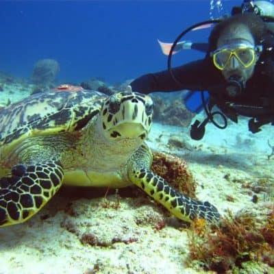 Дайвинг в Таиланде — где увидеть экзотический мир?