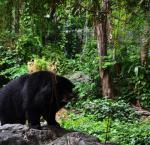 Достопримечательности Таиланда: зоопарк Дусит