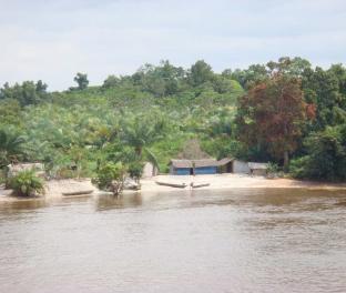 Настоящие джунгли, Сьерра-Леоне