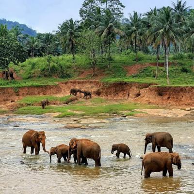 Прогноз погоды в Шри-Ланке и сезоны для отдыха, когда лучше ехать