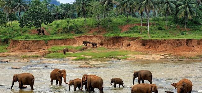 Сезоны отдыха и курорты Шри-Ланки